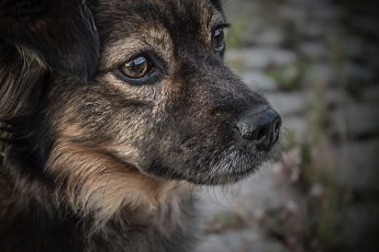 Laws for stray animals in India  – Tappy Paws