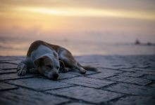 7 reasons why adopting a stray is a good choice…