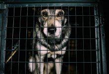 Animal Abuse!